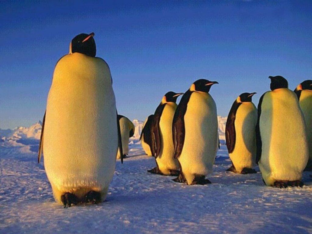 pingouin.39233